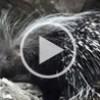 Video-Fototrappolaggio