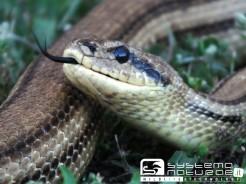 Il risveglio dei serpenti