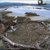 Videomonitoraggio Falco pescatore