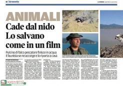 Complicato intervento di salvataggio di 2 piccoli di Falco pescatore